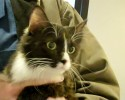 92.5 The Chief Pet of the Week 1 8 14 Cupcake 0 00 36-30