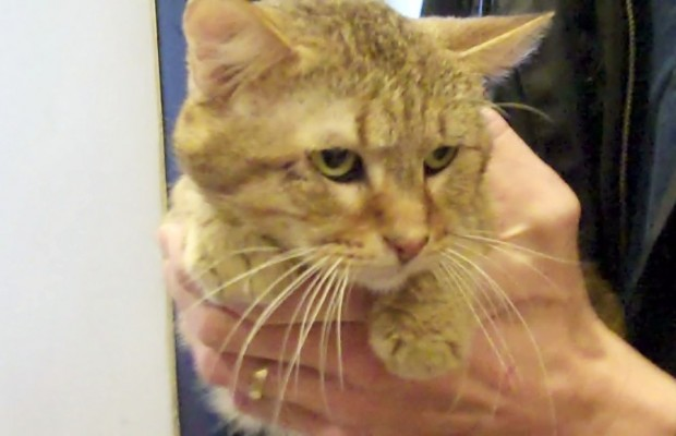 Pet of the Week 2/26/14 Halibut