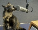 92.5 The Chief Pet of the Week 3 12 14 Corina 0 00 28-06