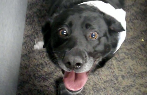 Pet of the Week 3/5/14:  Zee