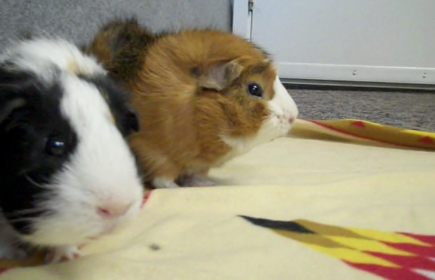 Pet of the Week 4/30/14: Stan and Ollie