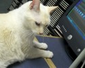 92.5 The Chief Pet of the Week 5 14 14 Loe 0 00 43-02