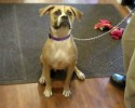 92.5 The Chief Pet of the Week 5 7 14 Rose 0 00 09-14